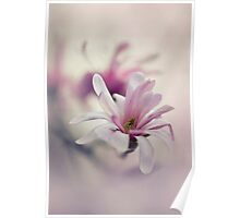 Pink and white magnolias Poster