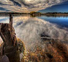 Stump by Bob Larson