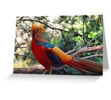 Golden Pheasant (Chrysolophus pictus) Greeting Card