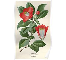 Favourite flowers of garden and greenhouse Edward Step 1896 1897 Volume 1 0147 Camellia Poster