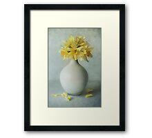 Daffodils in a white flowerpot Framed Print