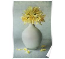 Daffodils in a white flowerpot Poster