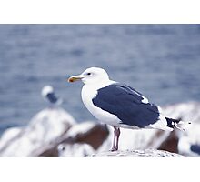 Gloomy Day With Seagull Photographic Print