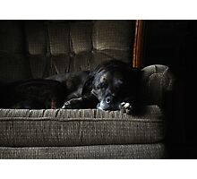 Dog Tired Photographic Print