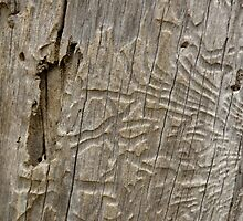 Tracks by rosmick-images