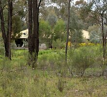 Home among the gum trees by rosmick-images