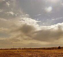 Iowa Corn Fields by Linda Miller Gesualdo