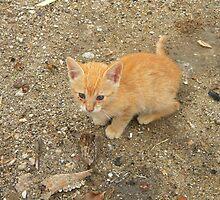 Stray kitten in Crete by Anne Sanders