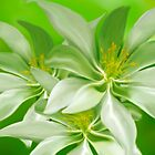 White Green Yellow by Cliff Vestergaard
