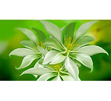 White Green Yellow Photographic Print