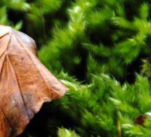Leaf on Moss Sticker