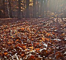 The Autumn Lights Symphony. by Brown Sugar. Views (164) Thx! by © Andrzej Goszcz,M.D. Ph.D