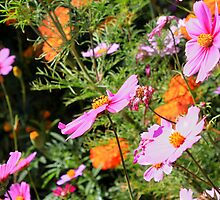 Pink and Orange flowers by Caroline Hannessen
