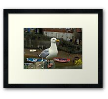 A Herring gull close up. 1980s Framed Print
