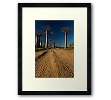 Baobabs Alley I Framed Print