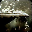...falling... by Geoffrey Dunn