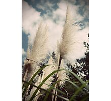 Feathered Brush Photographic Print