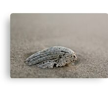 Frail Shell- handprint of the waves  Canvas Print