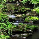 Sheoak Creek  by Stephen Ruane