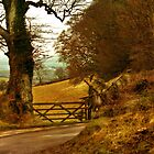 Haldon Forest in Autumn by Catherine Hamilton-Veal  