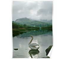 Swan in the Lake District, Cumbria, UK Poster