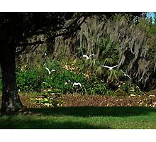 lets peek out to the blue yonder (Floridas bird paradise ) Photographic Print