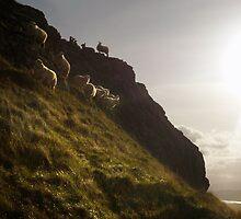 where sheep may safely graze by John Beswick