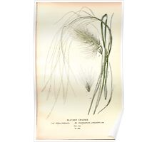 Favourite flowers of garden and greenhouse Edward Step 1896 1897 Volume 4 0275 Feather Grasses Poster