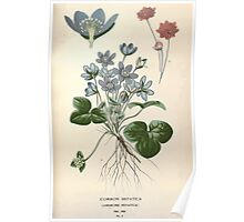 Favourite flowers of garden and greenhouse Edward Step 1896 1897 Volume 1 0027 Common Hepatica Poster