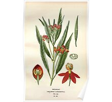 Favourite flowers of garden and greenhouse Edward Step 1896 1897 Volume 3 0089 Redhead Poster