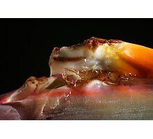 Dessert?  1226 Photographic Print