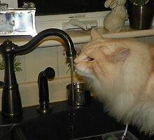 Maine Coon Cat Bentley Drinking From Faucet by MeMeBev