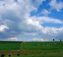 Ardennes landscape with cows by intensivelight