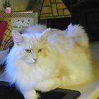 Maine Coon cat Bentley just relaxing by MeMeBev