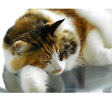 Maine Coon cat Lexus sleeping on porch table Photographic Print