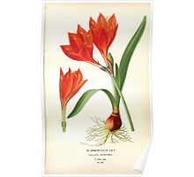 Favourite flowers of garden and greenhouse Edward Step 1896 1897 Volume 4 0119 Scarborough Lily Poster
