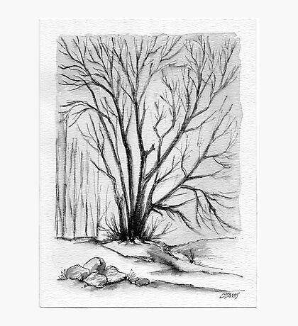 FALL TREE - AQUAREL AND ECOLINE Photographic Print