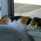 Maine Coon cat Lexus on porch window sill by MeMeBev