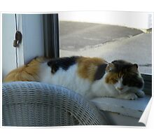 Maine Coon cat Lexus on porch window sill Poster