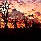 """ Woodland sunset""    (Tehidy woods.) by mrcoradour"