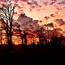 """"""" Woodland sunset""""    (Tehidy woods.) by Malcolm Chant"""