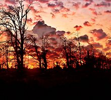 """ Woodland sunset""    (Tehidy woods.) by Malcolm Chant"