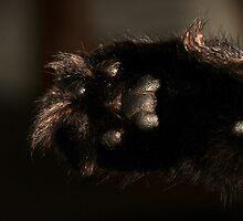 Kitty Paw by Marcia Rubin