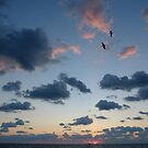 Pelicans At Sunrise by Scott Kennelly