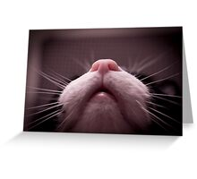 Mouth, nose and whiskers cat Greeting Card