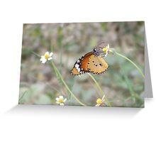 Butterfly feeding on meadow flower Greeting Card