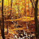 Autumn creek by Maria1606