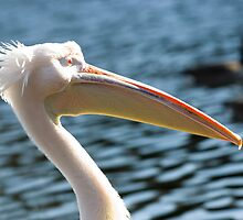 A proud looking Pelican profile. by Russell Bruce