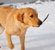 Snow dog with feather by Wildernesschic