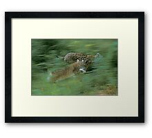 Two playing lynx Framed Print